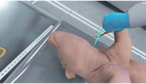 fetal pig dissection vr